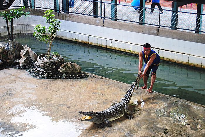 Ciemna strona Tajlandii - Zbrodnie przeciwko przyrodzie