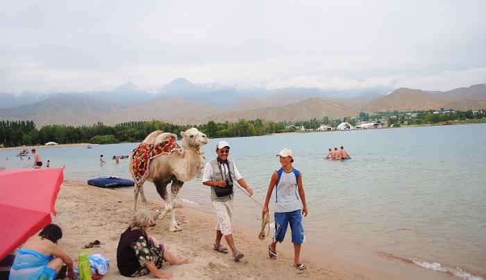Spacer z wielbłądem nad jeziorem Issyk-Köl.