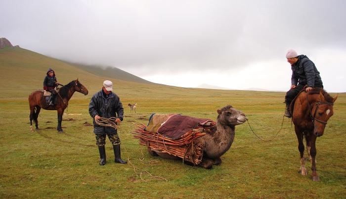 Kyrgizi pakują złożoną jurtę na wielbłąda.