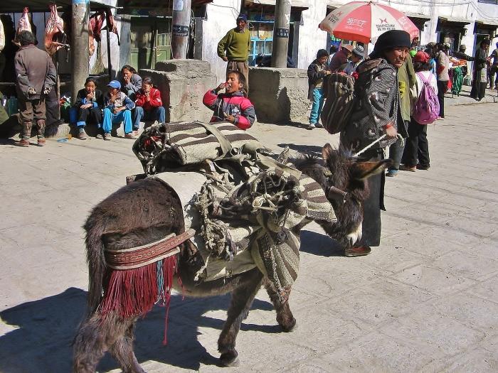 Tybet.
