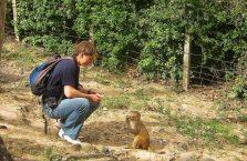 Nepal - karmiłem małpę w Kathmandu.