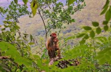 Sri Lanka - małpki w dżunglii.