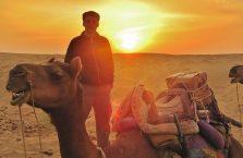 Indie - wesoły wielbłąd o zachodzie słońca.
