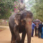 Indie - Hindus na słoniu.