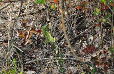 Gruzja - zielona jaszczurka.