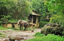 Singapur - słoń.