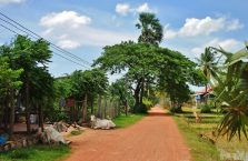 Kambodża - krowy na udeptanej drodze.