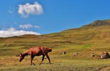 Azerbejdżan - koń na pastwisku.
