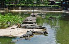 Tajlandia - krokodyle.