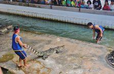 Tajlandia - pokaz krokodyli.