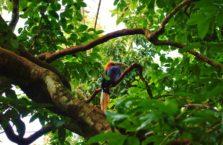 Birma - samotny ptak w drzewach.