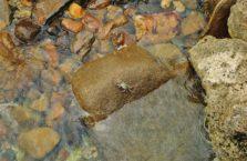 Malezja - krab.