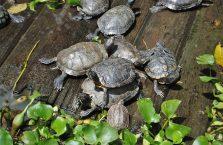 Tajlandia - żółwie.