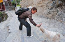 Iran - przepycham się z małą kozą w górach Alborz.