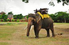 Wietnam - słoń w starym mieście Hue.