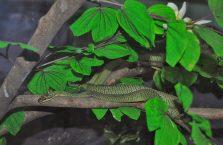 Tajlandia - węże.