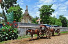 Birma - zaprzęg konny.