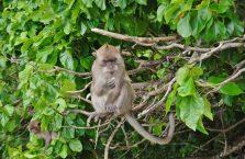 Tajlandia - małpa.