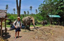 Tajlandia - słoń na Koh Samui.
