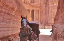 Jordania (Petra) - zaprzęg konny.