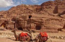 Jordania (Petra) - piękne wielbłądy.