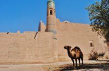 Uzbekistan - wielbłąd w starym mieście Khiva.