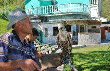 Kazachstan - hodowca ptaków drapieżnych z jastrzębiem.