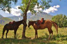 Kazachstan - konie podczas wyprawy górskiej.