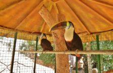 Irak (Kurdystan) - tukan w zoo w Dohuk.