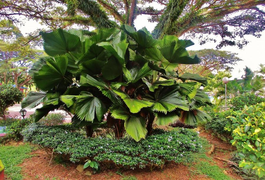 Przyroda na Borneo.