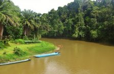 Brunei - Temburong (4)