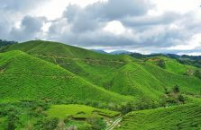 Cameron Highlands (12)