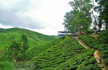 Cameron Highlands (13)