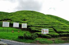 Cameron Highlands (16)