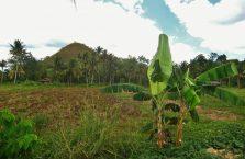 Czekoladowe Wzgórza Bohol (5)