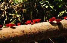 Gunung Gading Borneo (5)