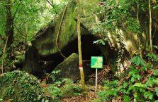 Gunung Gading Borneo (6)