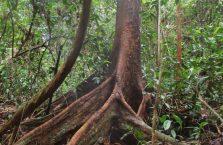 Kinabatangan Borneo (13)