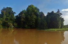 Kinabatangan Borneo (17)