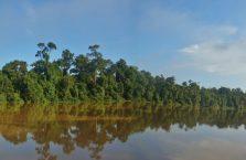 Kinabatangan Borneo (18)