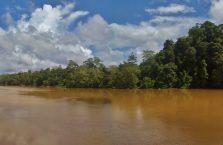 Kinabatangan Borneo (19)