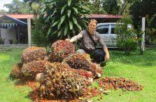 Kinabatangan Borneo (9)