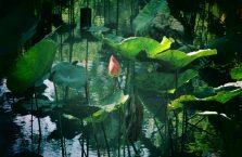 Kota Kinabalu Borneo (64)