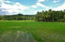 Loboc Bohol (4)