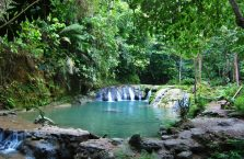 Locong Siquijor (1)