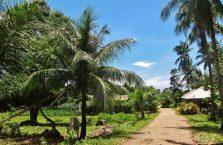 Locong Siquijor (2)