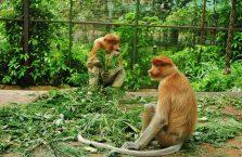 Lok Kawi Wildlife Park Borneo (10)