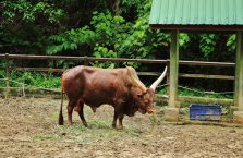 Lok Kawi Wildlife Park Borneo (11)
