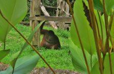 Lok Kawi Wildlife Park Borneo (15)