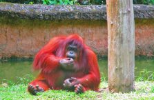 Lok Kawi Wildlife Park Borneo (16)